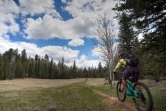 Arizona Trail Barren Quakie (Corie)