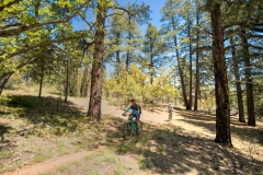 Locust to Fence Scrub Oak (Corie, Paul)