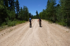 forest service roads