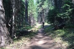 Mountain-Bikers-Climbing-through-California-Sierra-Buttes-Forest