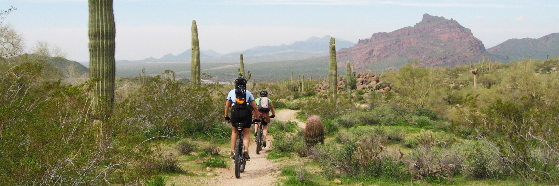 Two riders thread their way on singletrack between tall saquaro catcti in McDowell Sonoran Preserve