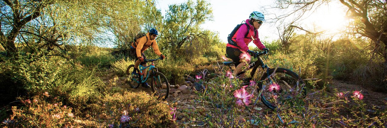 Flowers blooming between mesquite trees in Central Arizona as mountain bikers ride past on the Black Canyon Trail during a guided tour