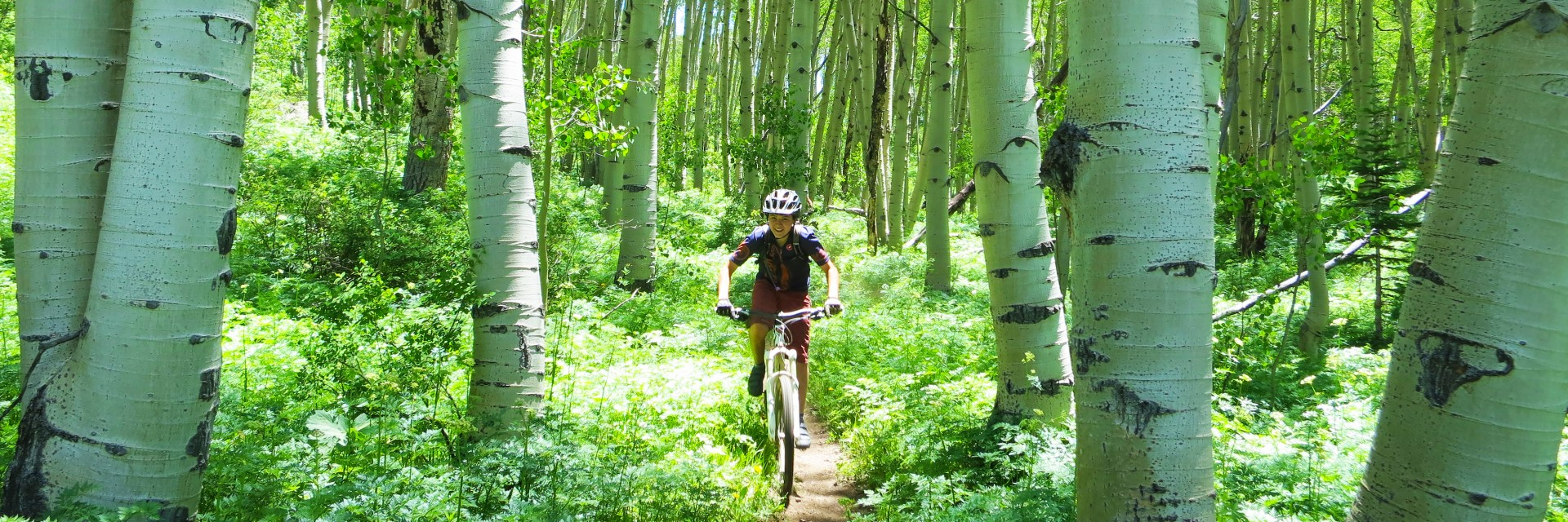 Through the aspens, Crested Butte Singletrack, guided mountain bike tour