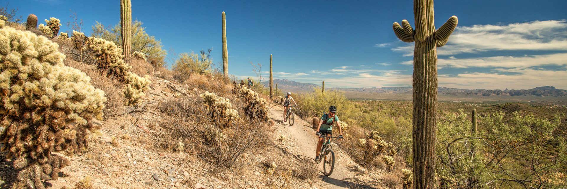 Heading down Dixie Mine Trail, McDowell Mountain Park, Arizona's Sonoran Desert guided mtb tour near Phoenix, AZ
