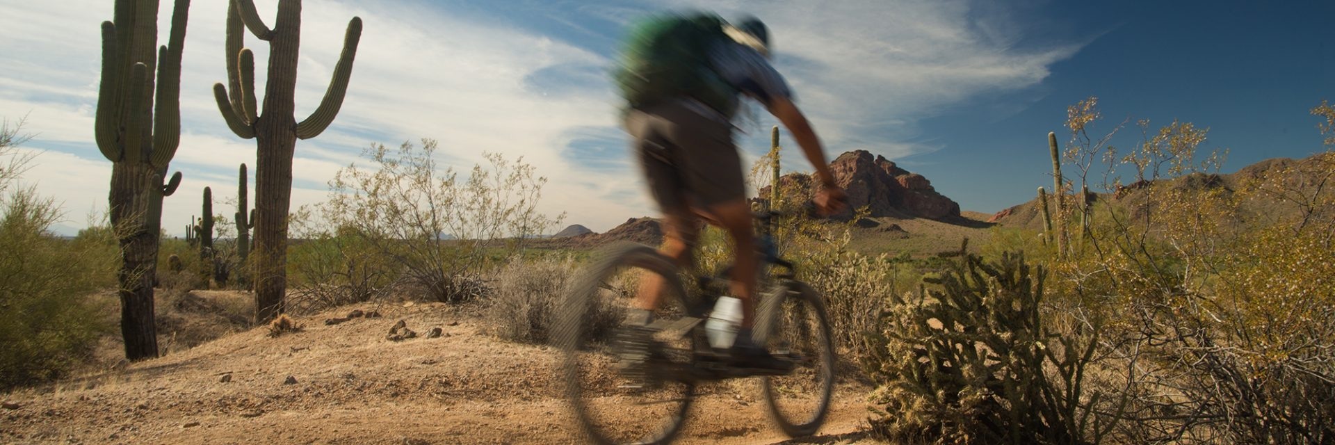Rider passes saguaros, Arizona's Sonoran Desert guided mtb tour near Phoenix, AZ