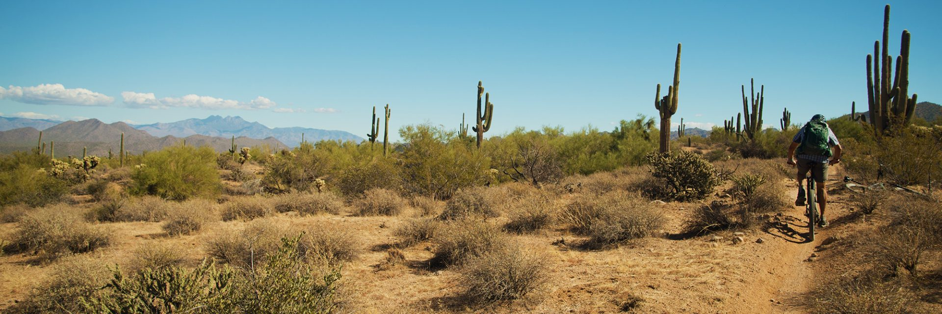 Four Peaks on skyline of Wild Horse Trail, Arizona's Sonoran Desert guided mtb tour
