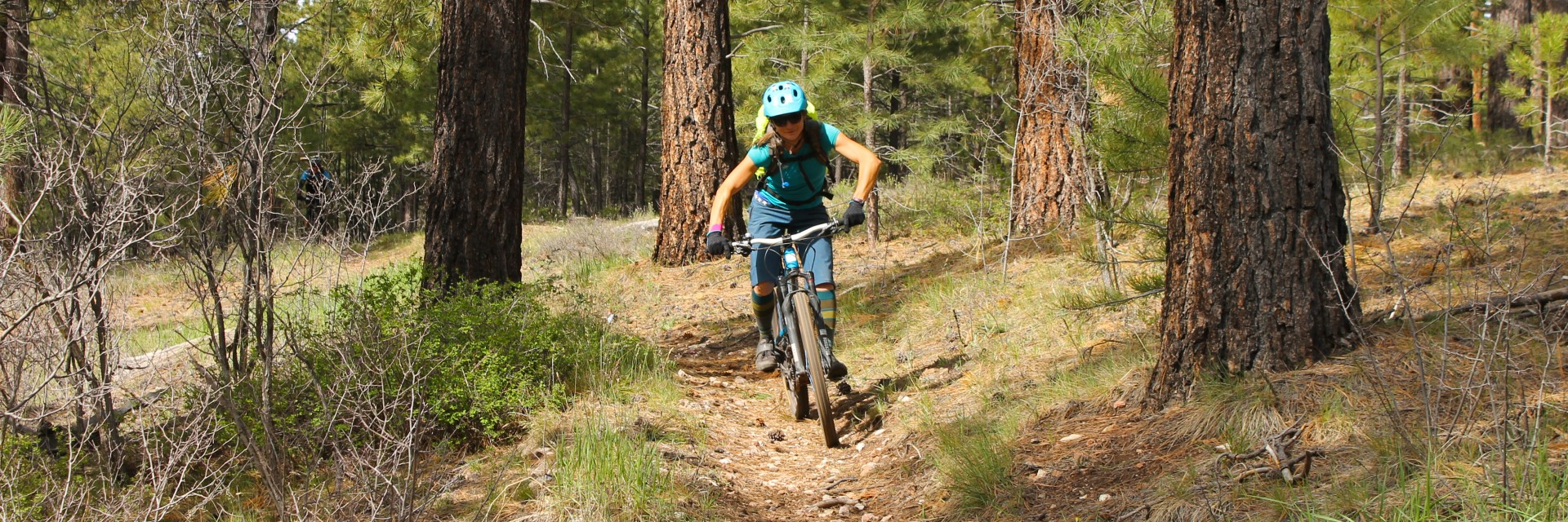 Much of the guided mountain bike tour along the Rainbow Rim Trail on the North Rim of the Grand Canyon is through ponderosa pine forests