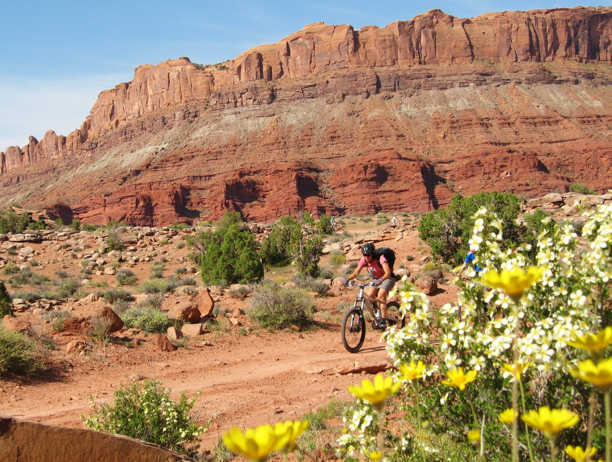 Cliffrose in bloom near GSENM adds to wonderful mountain bike guided tour