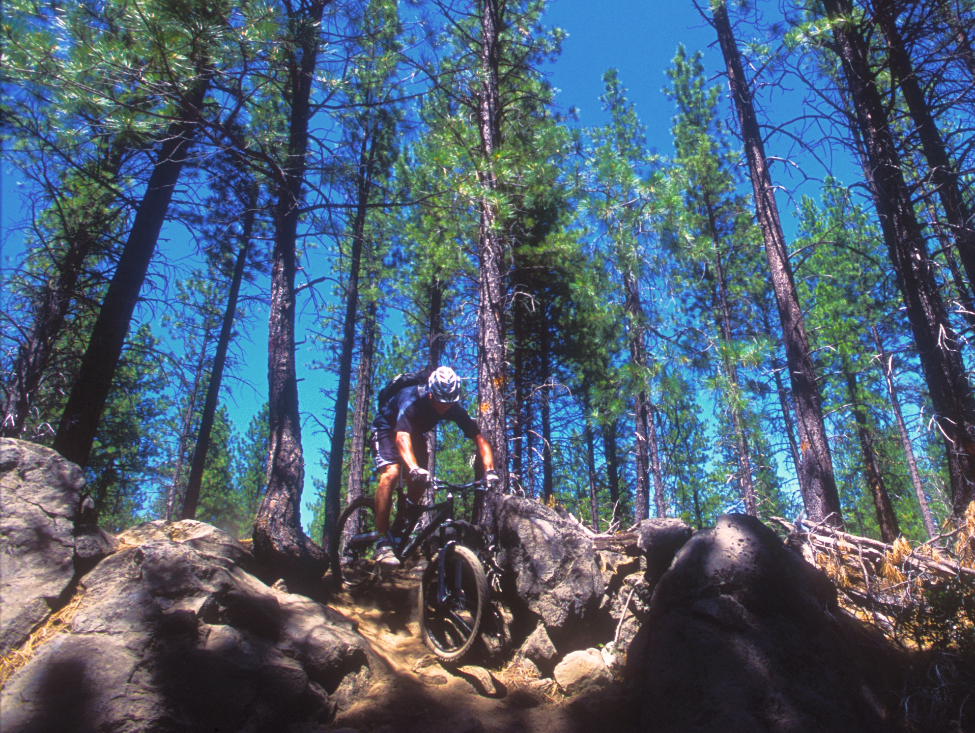 Oregon Cascade Singletrack guided mountain bike tour, Bend OR twists through logpole pine forests and past mountain lakes