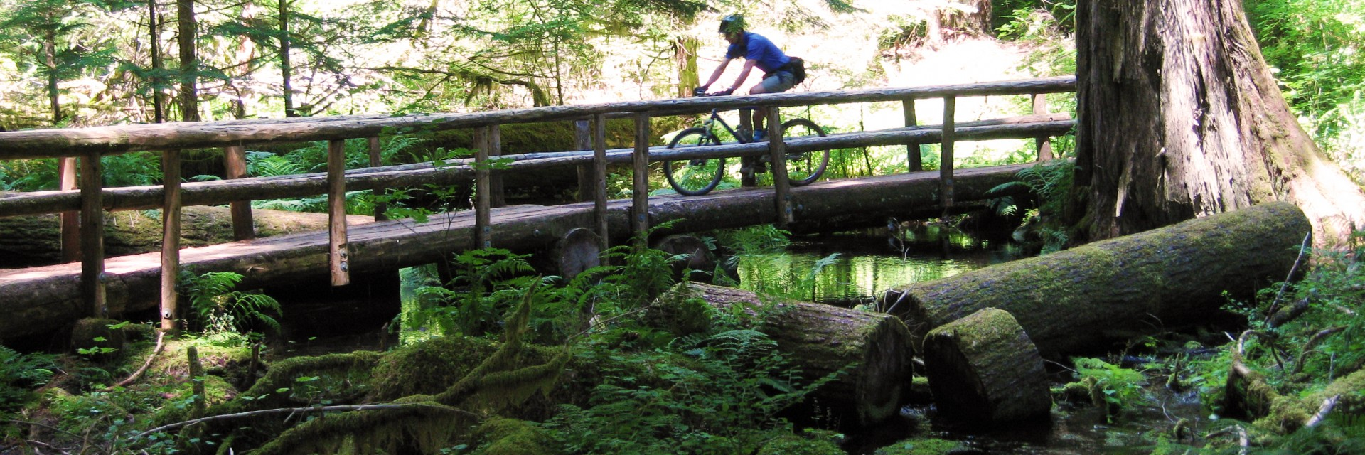 A mountain bike rider crosses a split log bridge on the guided Oregon Cascade Singletrack tour near Bend OR