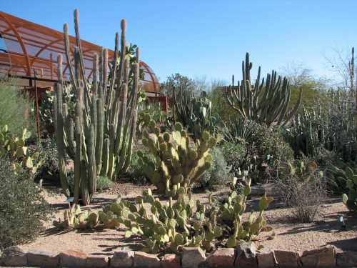 The Phoenix Garden is a great place to visit after your Arizona mountain bike tour is over