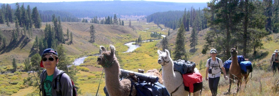 llama supported pack trips